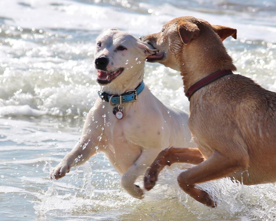 Familias adoptan los primeros perros clonados