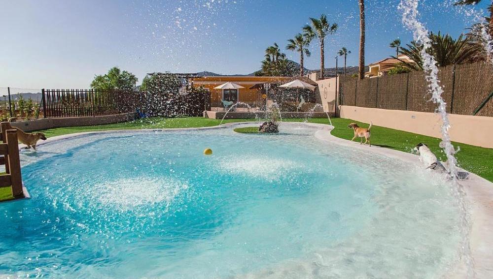 El hotel para perros más lujoso está en Tenerife
