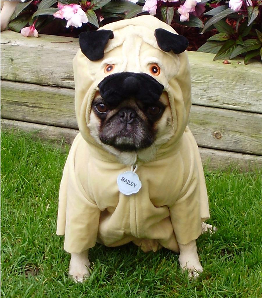 ¿Es bueno usar abrigos en los perros en invierno?