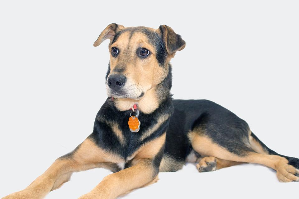 Boicot a la película Tu mejor amigo (A Dog's Purpose)