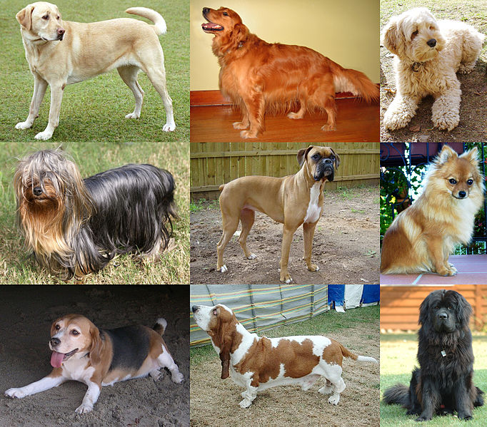 ¿Con qué animal se lleva mejor un perro?