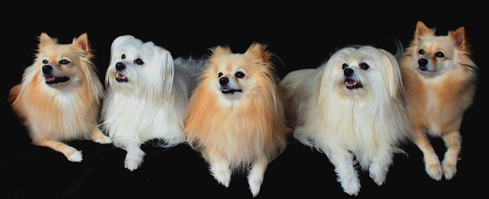 Encuentran un criadero ilegal de perros en Madrid
