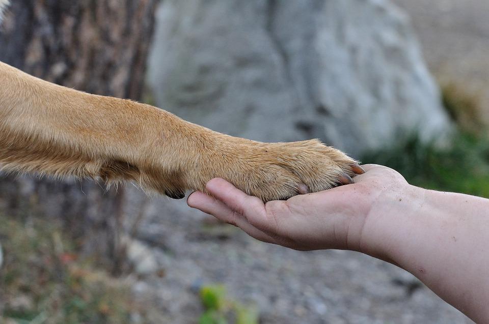 Héroe que rescató a perros en Buenos Aires