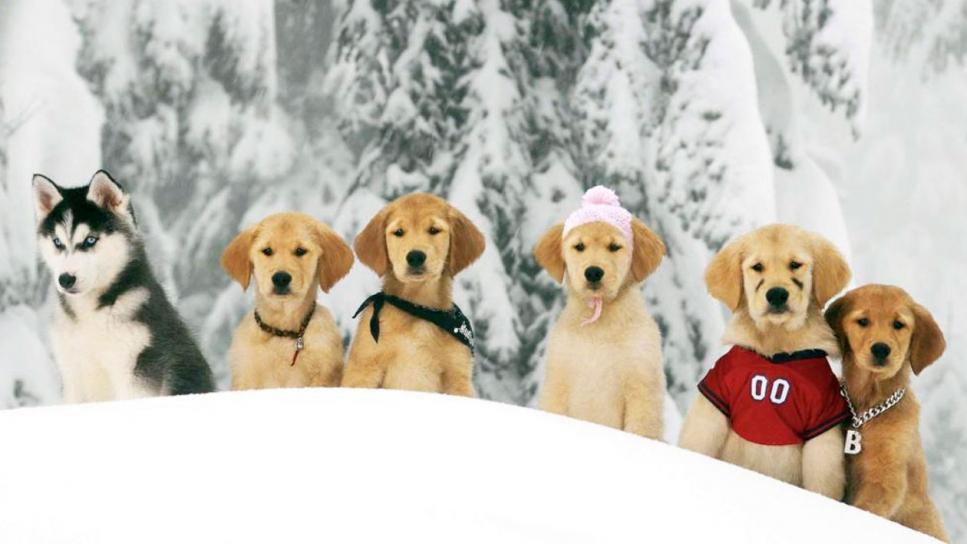 cachorros-en-la-nieve