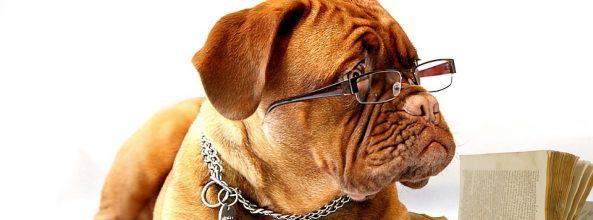 Llega la musicoterapia para perros