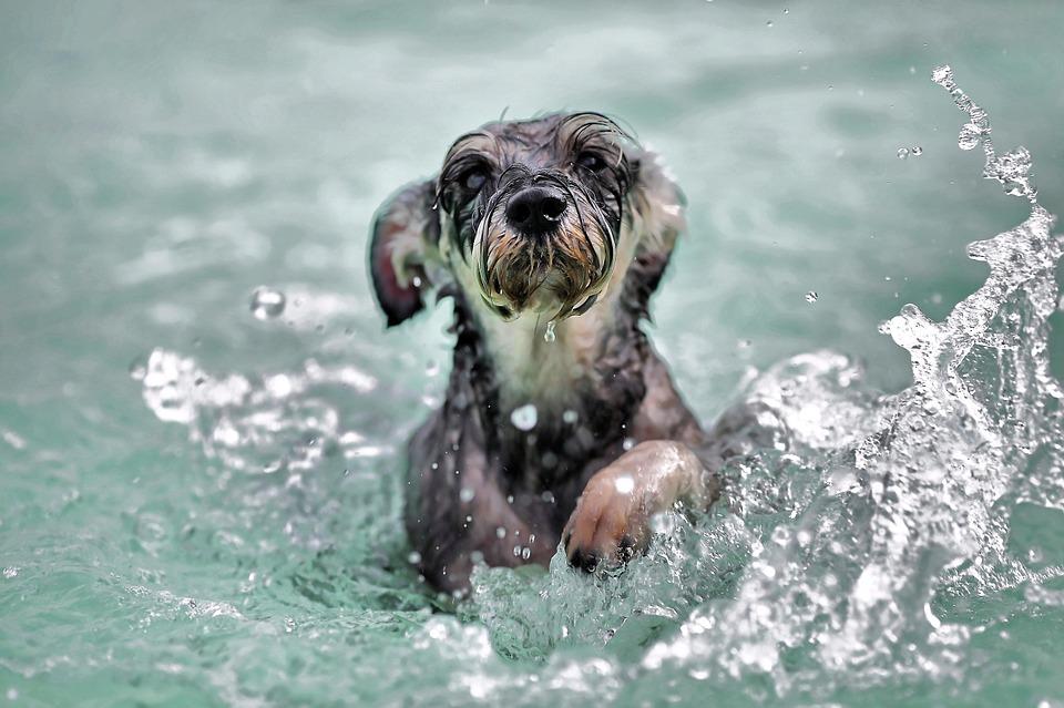 Un perro salva a otro de ser ahogado