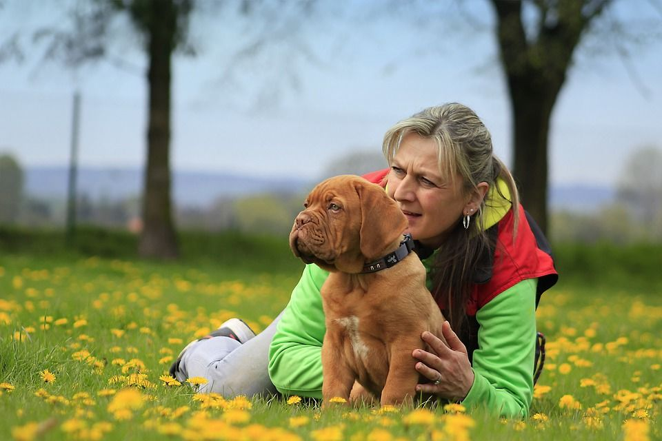 3 claves para alargar la vida de un perro