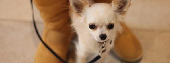 Avidog, la nueva red social para buscar canguros a tu perro