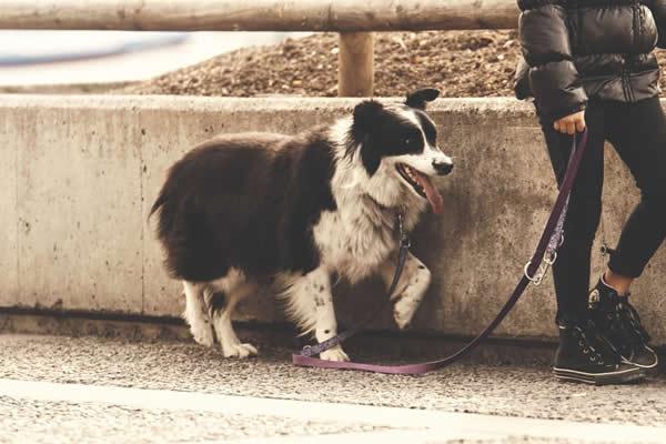 ¿Cómo es el paseo adecuado con un perro?