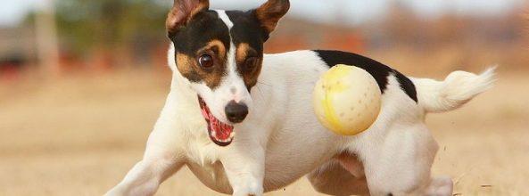 Los perros han sufrido mutaciones genéticas por la domesticación