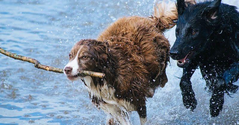 ¿Los perros pueden padecer de demencia senil?