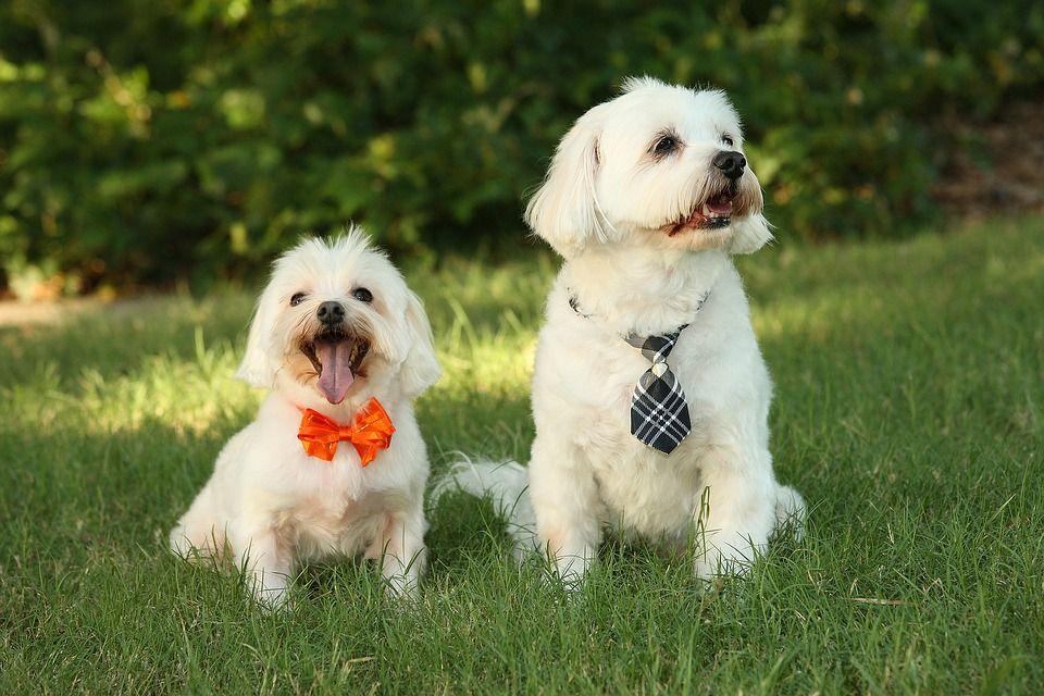 """""""Paseador de perros"""" la profesión que triunfa en Estados Unidos"""