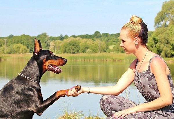5 métodos para ejercitar la mente de tu perro