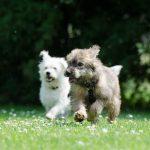 Cuidado con los robos de perros en España