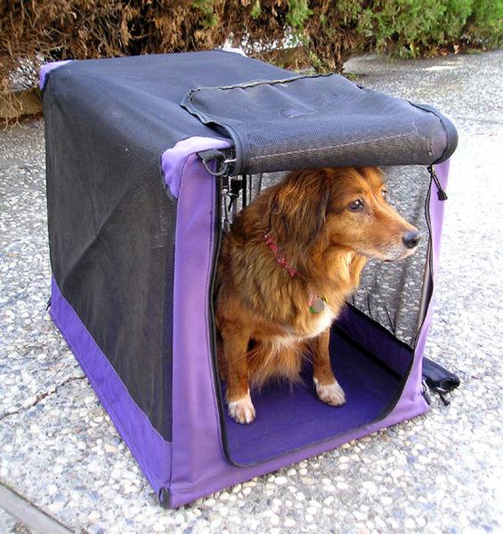 El Brexit pone en peligro la movilidad de los perros en el país