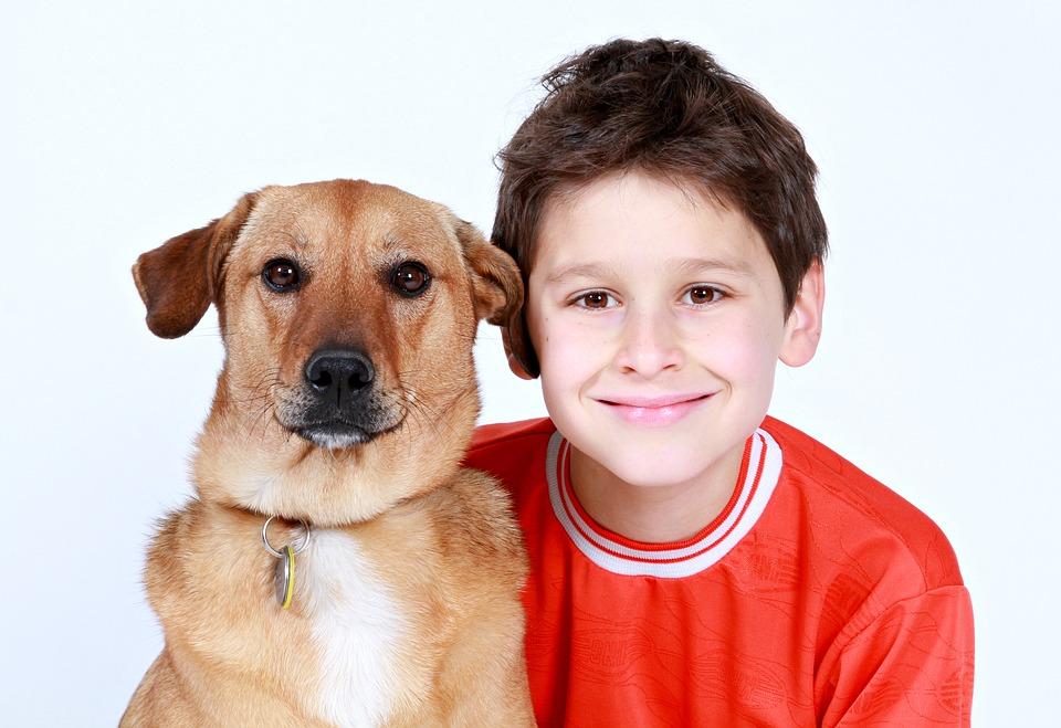 ¿Los perros reaccionan de manera similar a los bebés?