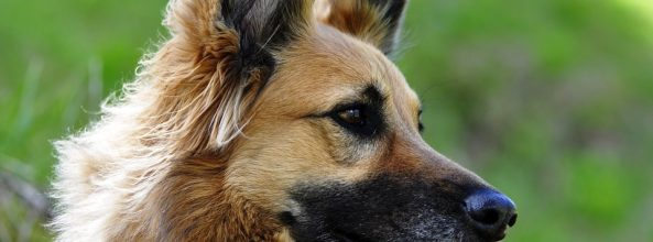 Perros abandonados se convierten en recogepelotas
