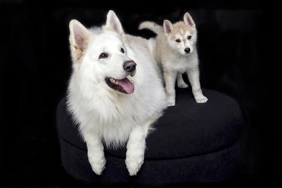 Resolución Convenio: para prohibir cortar rabos de perros