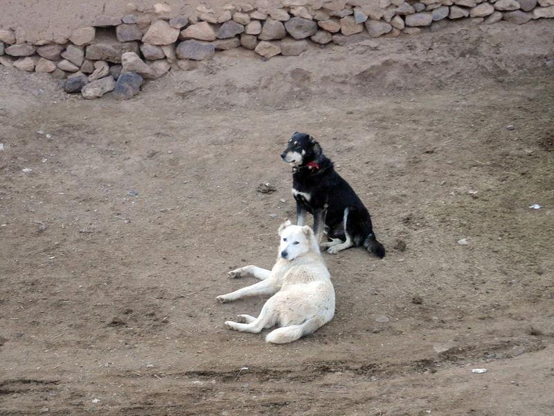 Tirotean a dos perros en Sevilla