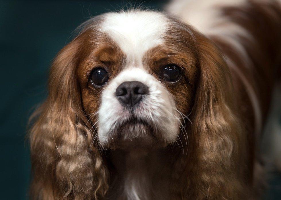 Los perros más bonitos del mundo