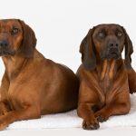PETA en contra de los experimentos en perros