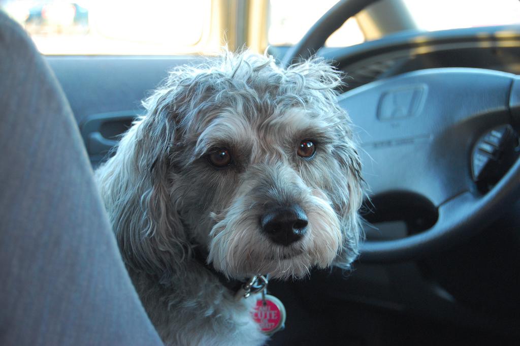 Cómo viajar con perros en el coche
