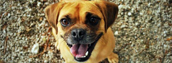 El sexto sentido de los perros para clasificar a las personas