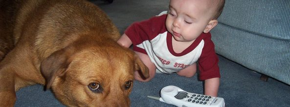 Los niños que se crían con perros tienen menos alergias
