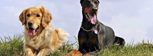 ¿Los perros tienen alma y guías espirituales?