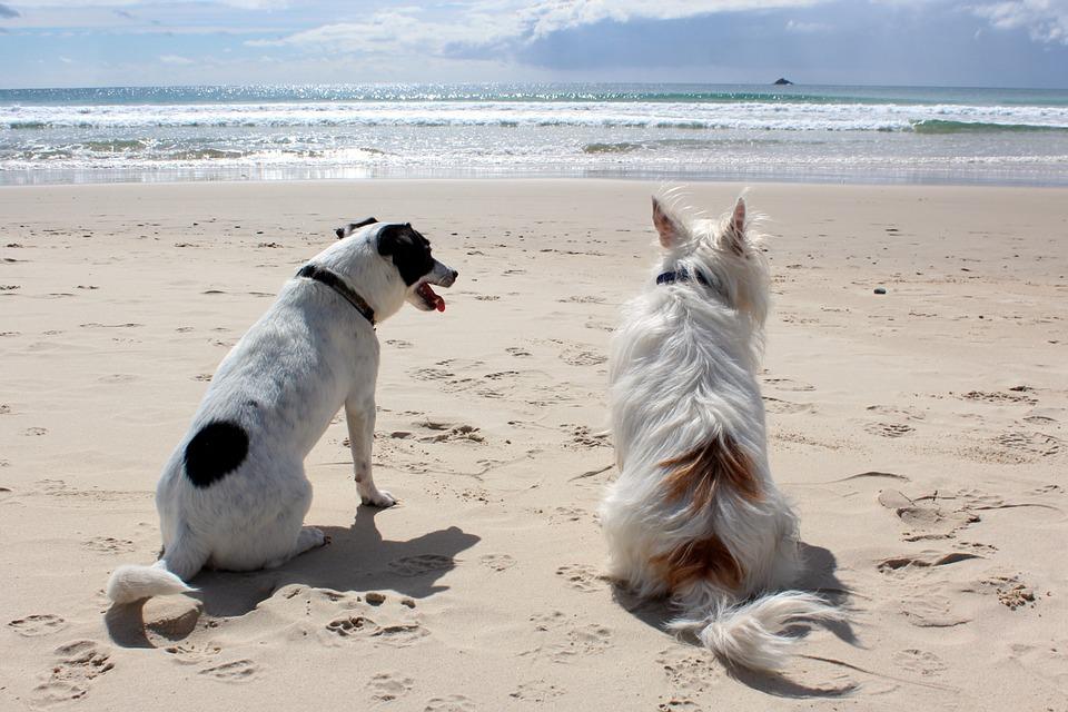 Nuevos arenales para perros en Vigo