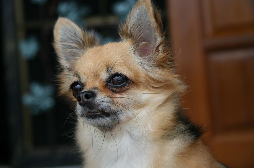 Se rescata a 59 perros en estado de desprotección