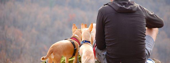 Viajar con perros en Semana Santa