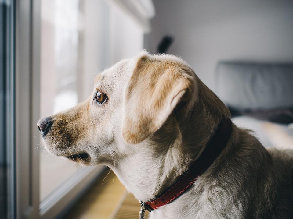 Alicante: habrá multas por tener a perros solos más de 12 H