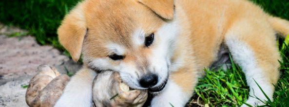 Llega la custodia compartida en perros