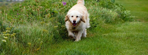 ¿Los perros pueden comer hierba?