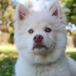 Parque para perros: En el Parque Bens
