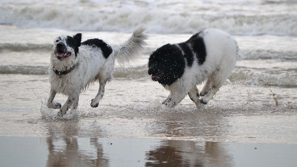Playas para perros Junio 2017