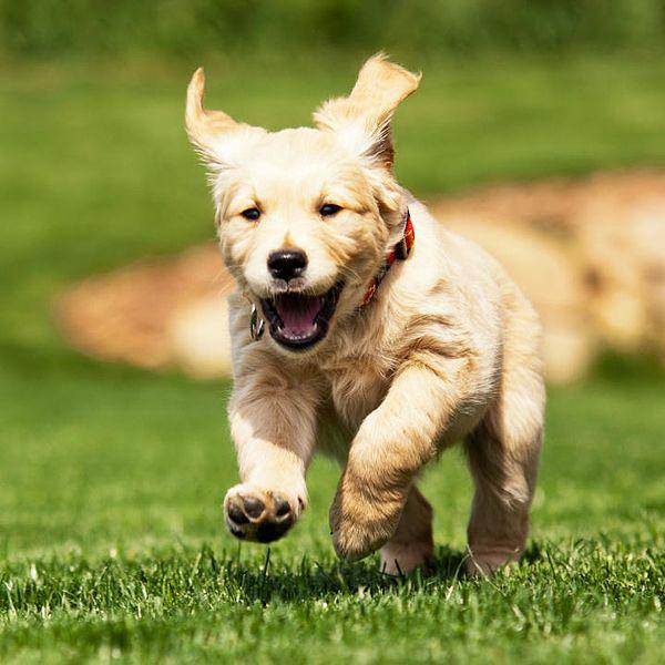 Se realizan terapia con perros para prevenir el acoso
