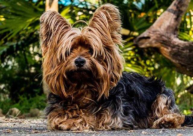Soluciones para que un perro no muerda muebles