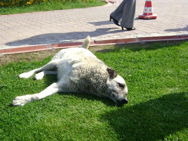 ¿Un perro de 3 patas puede hacer una vida normal?