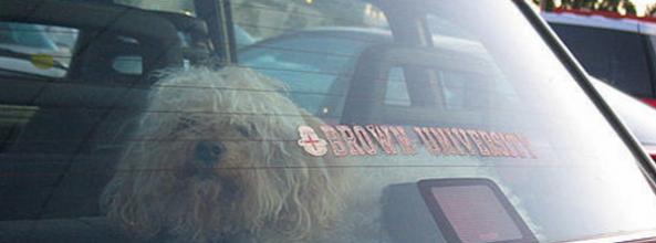 Lo que hay que hacer cuando encuentras un perro encerrado en un coche