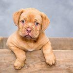 """""""A cara de perro"""" nuevo programa TV para denunciar maltrato animal"""