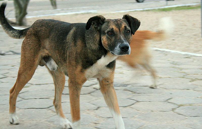 Cuentan la historia de Ivan Mishukov, criado por perros