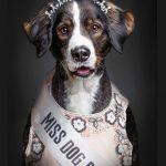 Dog people, el libro para perros