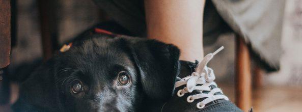 Las fotos de los perros Más Bonitos del Mundo