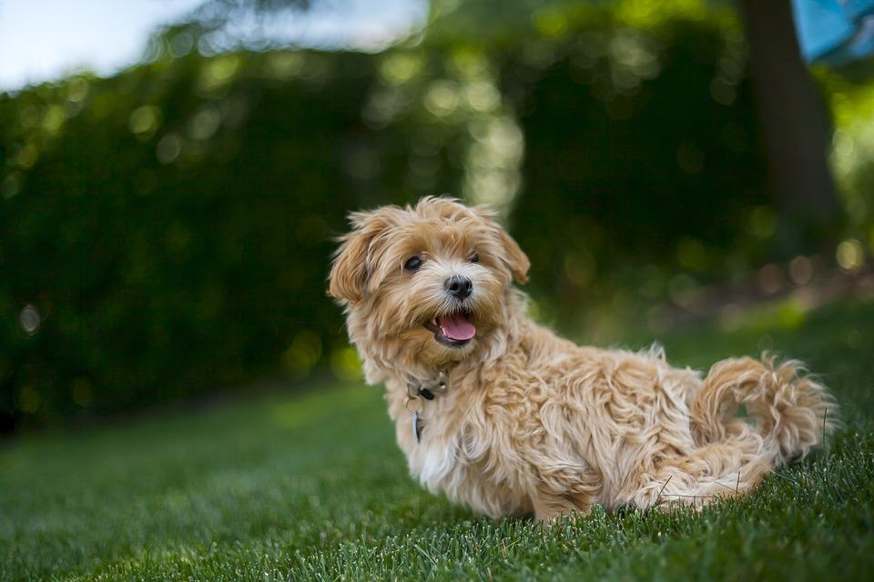 Nace la primera emisora para perros en Alemania