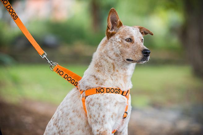 Nuevos collares avisan del carácter del perro