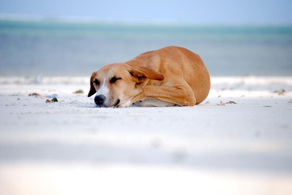 Playas de perros en Portugal