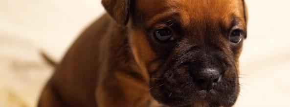 ¿Sabes que los perros no soportan la desigualdad?