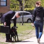 Vídeo: ¿venderías a tu perro por 90000 €?